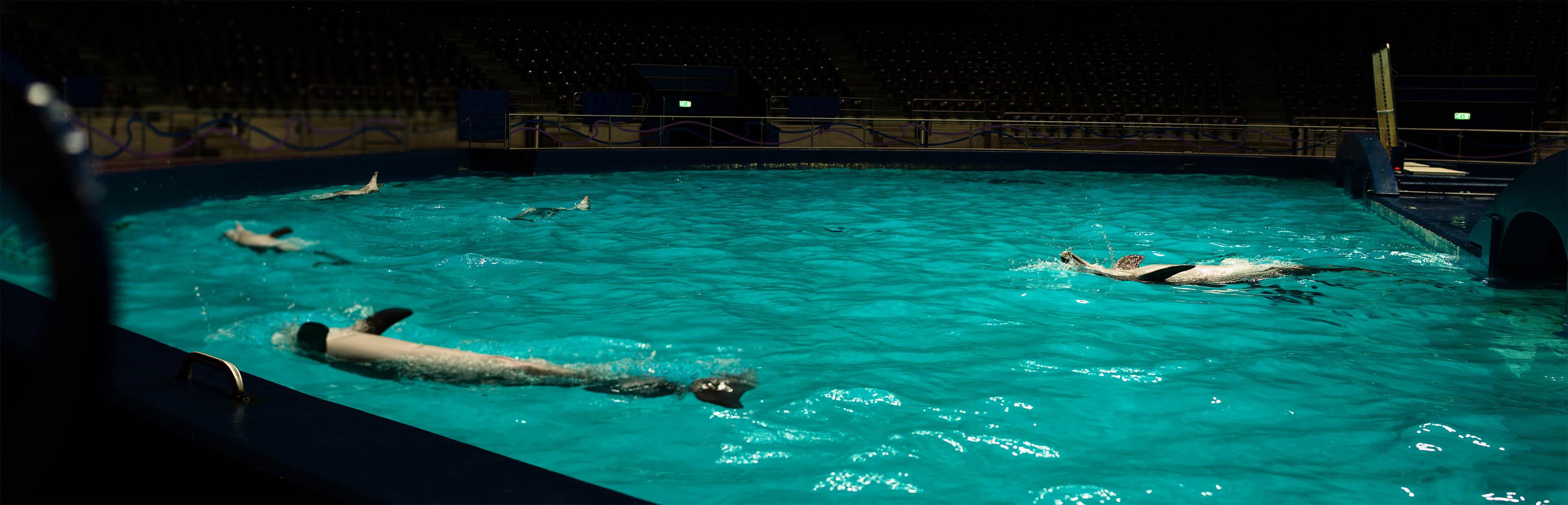 Jeffrey Wakanno in de DolfijnDoMijn